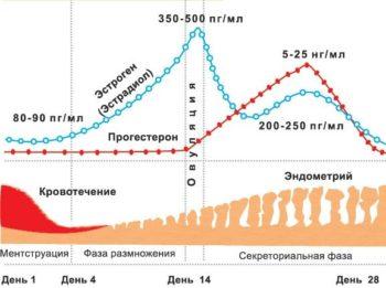 Изменение толщины эндометрия в зависимости от лня цикла