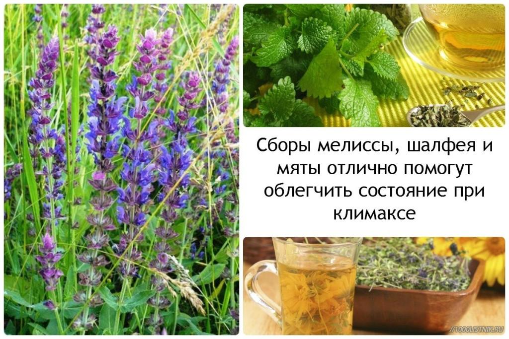 Какие травы пить при климаксе для облегчения состояния